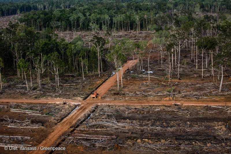 Documentation of landcover and oil palm plantation development in Papua.