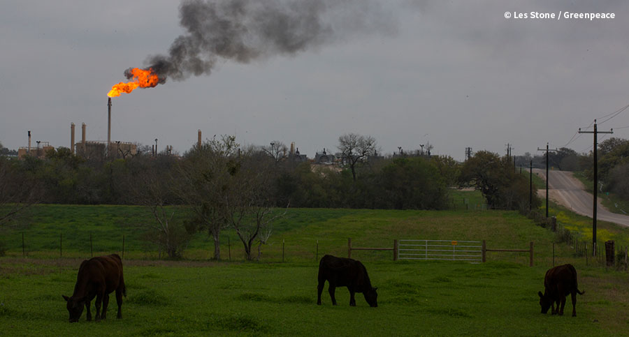 Cattle Grazing near Hydrofracking Installation in Texas