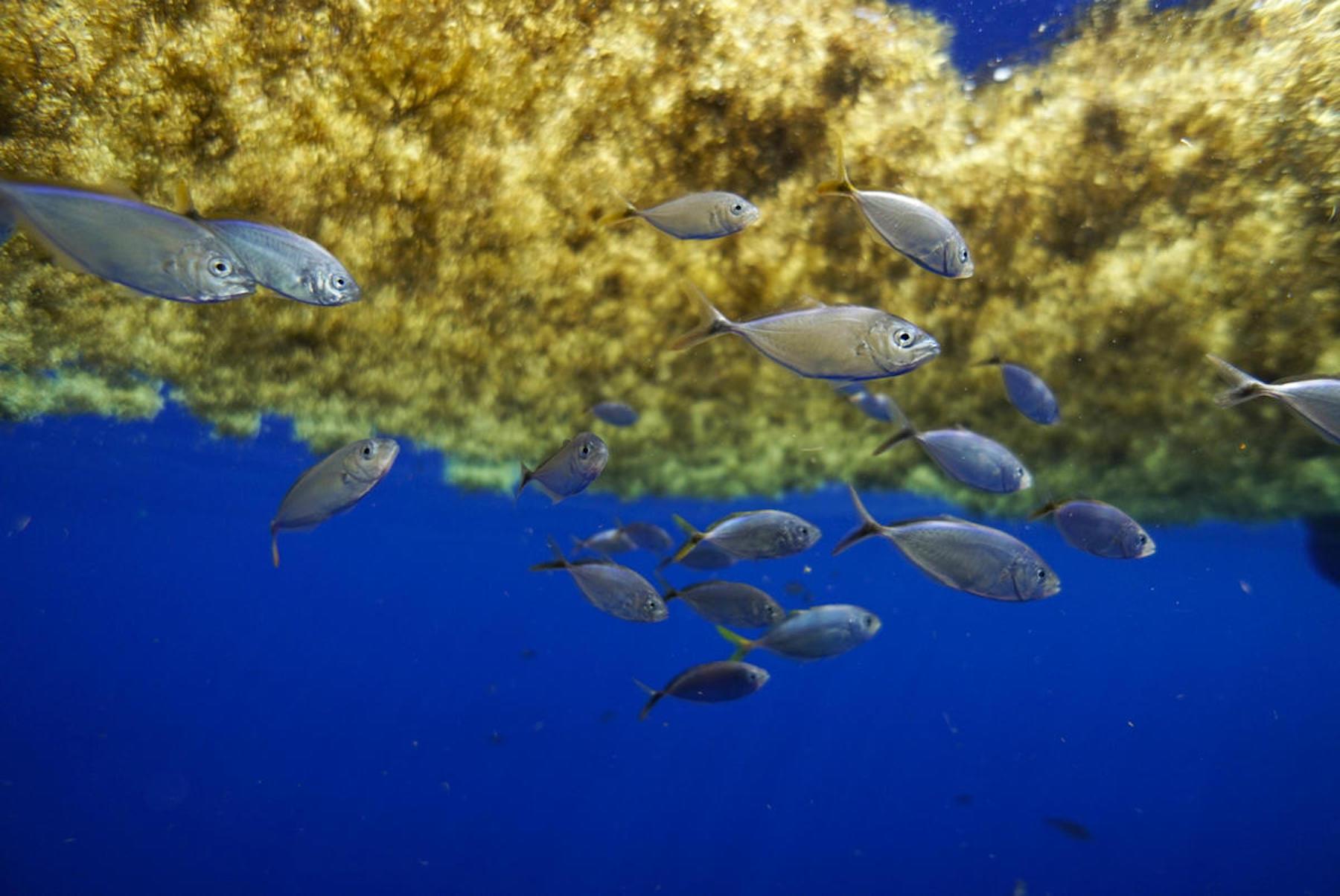 Hasta El Triángulo De Las Bermudas Tiene Un Problema Con El Plástico Greenpeace Usa