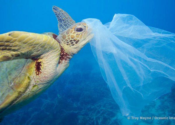 Sea turtle swimming through plastic