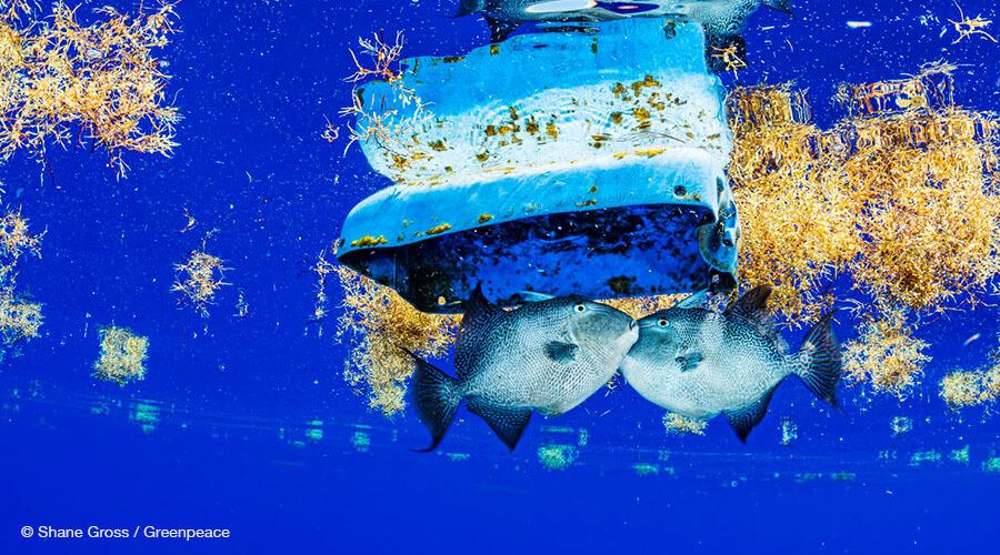 Fish and Plastic Debris in the Sargasso Sea