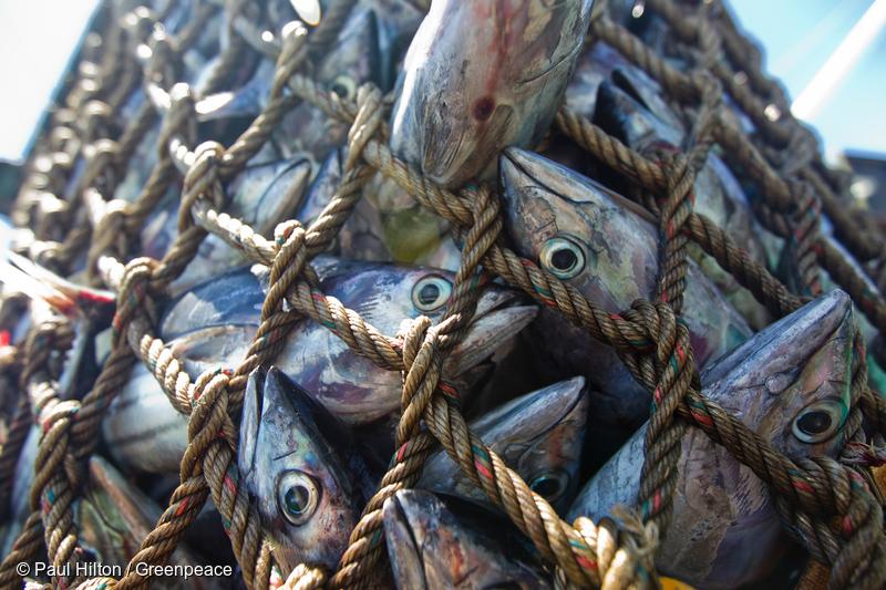 Photo: Fish in net